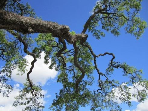 tree nature scenery