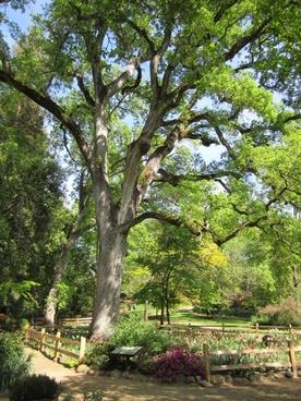 tree oak tree garden