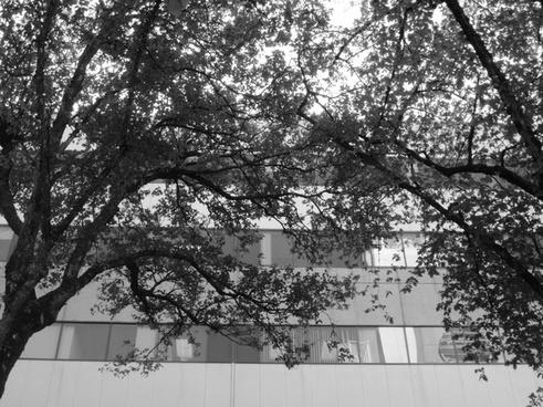 tree office