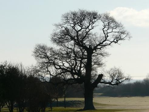 tree old tree nature