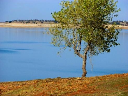 tree on lake 38