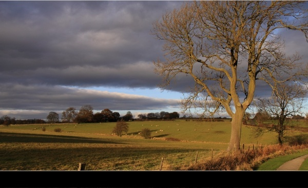 tree pasture landscape