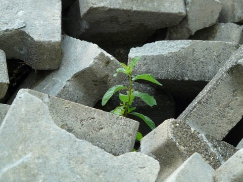 tree plant grow