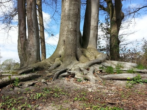 tree root forest