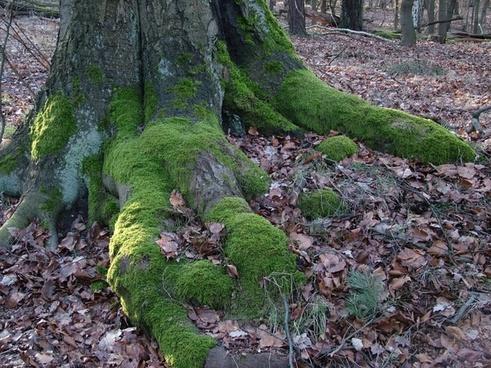 tree root moss