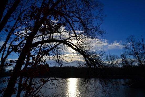 tree see mirroring