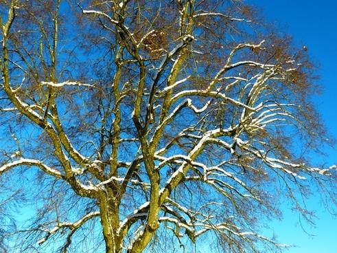 tree snow snowy