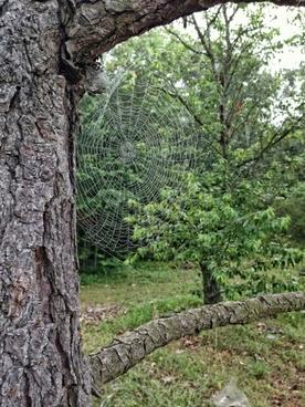 tree spider web leaves