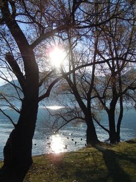 tree sun back light