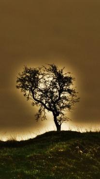 tree sun nature