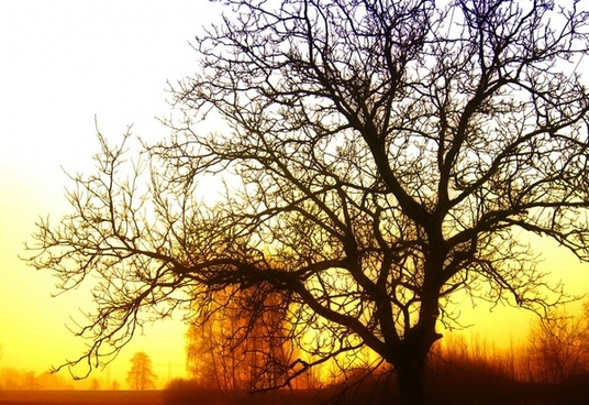 tree sunrise light