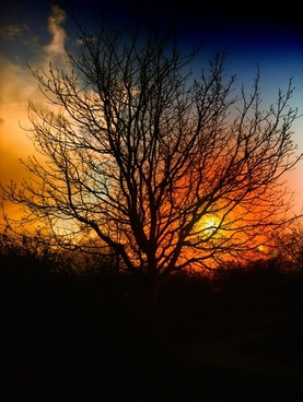 tree sunset beautiful
