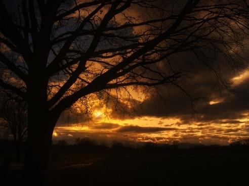 tree sunset beautiful