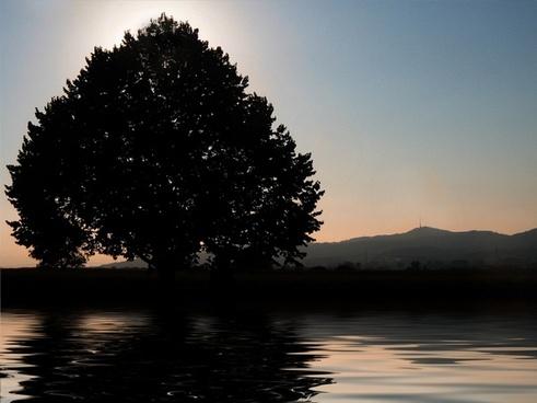 tree sunset see