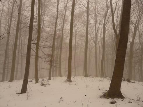 tree tree trunks fog