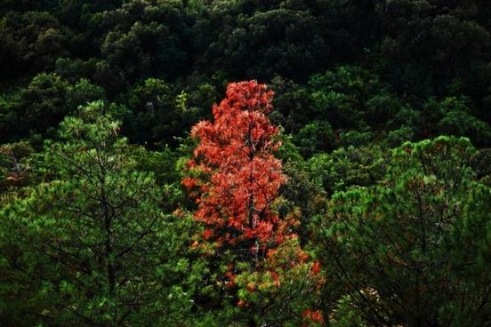 tree trees different