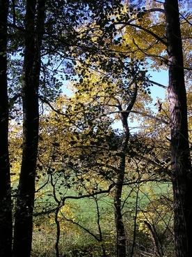 tree trees sky