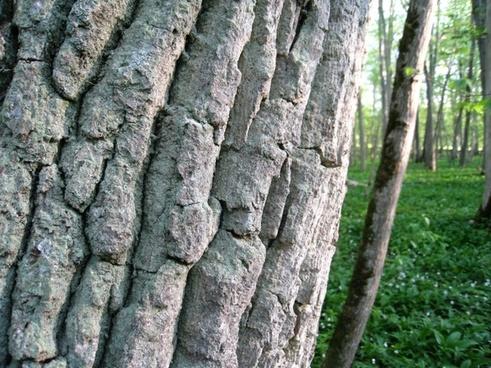tree tribe bark