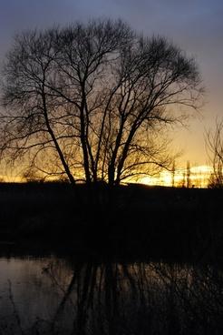 tree twilight sunset