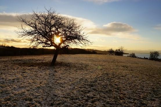 tree winter trees snow