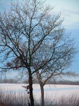 tree winter trees wintry