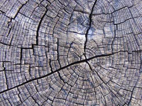 tree wood texture 14