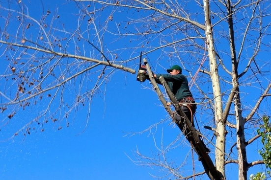 tree woodcutter chainsaw