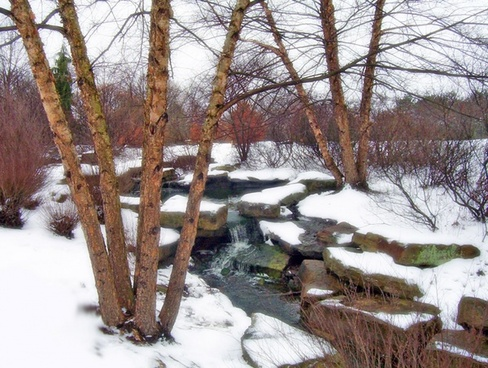 trees and creek in snow
