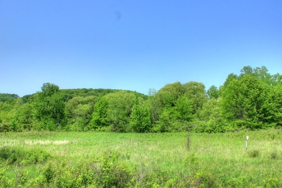 trees and landscape at hoffman hills state recreation area wisconsin