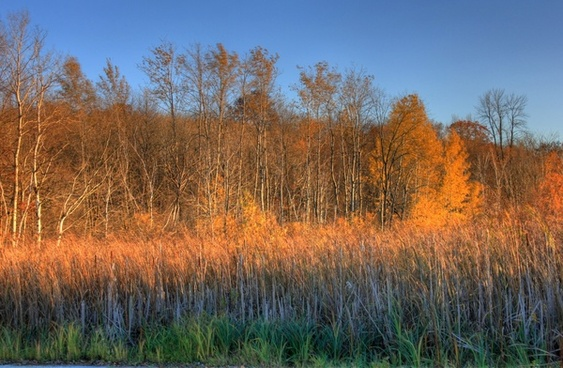 trees and marsh grasses at kettle moraine north wisconsin