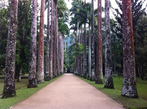 trees botanical garden nature