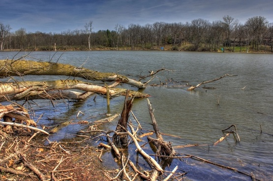 trees fallen in the water on the military ridge state trail