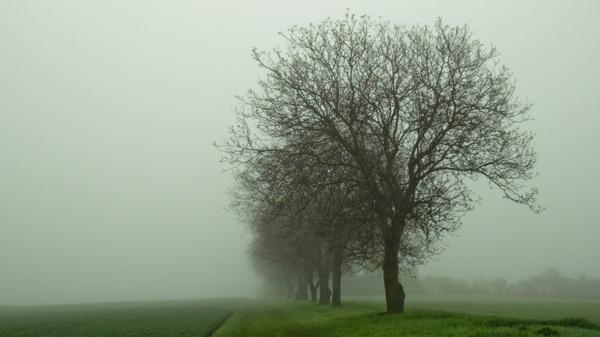 trees fog mood