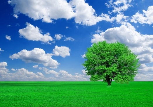 trees grass blue sky and highdefinition picture