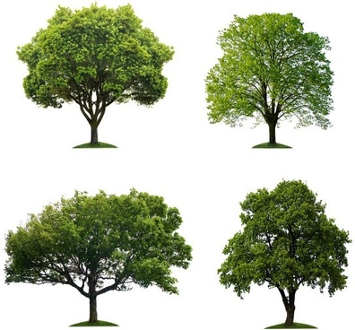 trees hd picture 5