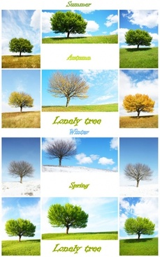 trees in four seasons highdefinition picture