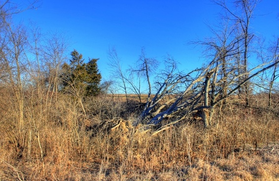 trees in winter at weldon springs state natural area missouri