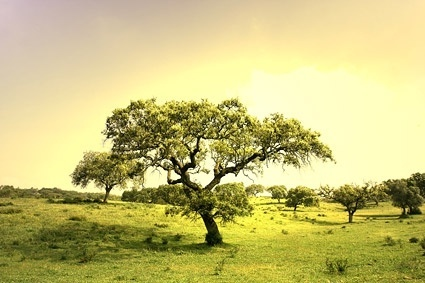 Tree images free stock photos download 12 388 free stock photos for commercial use format hd - Tree images free download ...