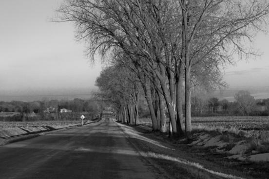 trees road roadside