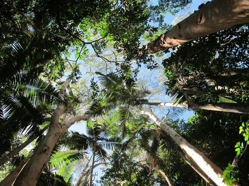 trees sky blue sky