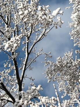 trees sky natural