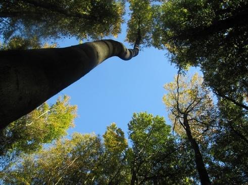 trees sky top
