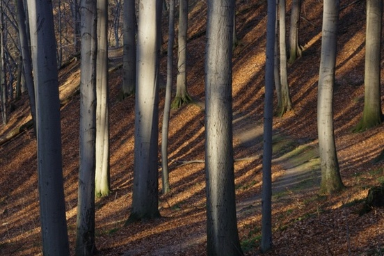 trees tree trunks autumn