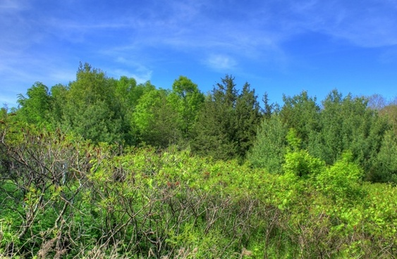 trees under blue skies at kinnickinnic state park wisconsin