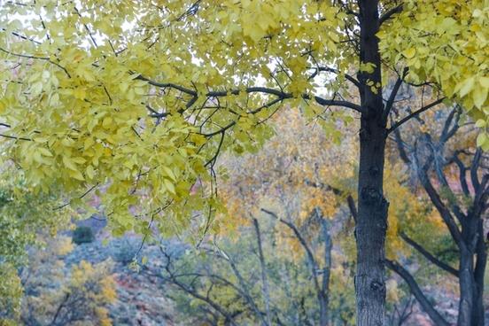 trees with yellow 038 orange leaves