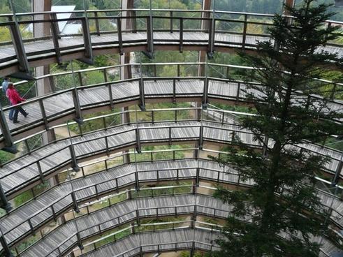 treetop path web boardwalk
