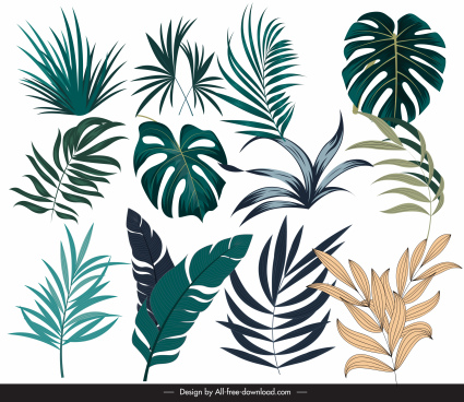 tropical leaf icons modern colored handdrawn design