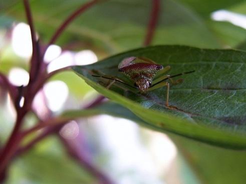 true bugs shrub the leaves
