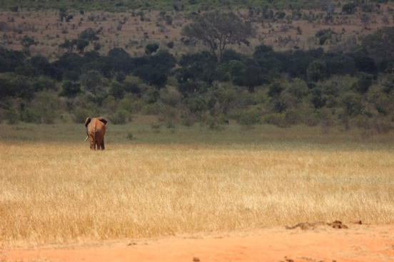 tsavo kenya the elephant