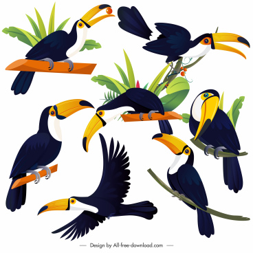 tucan birds icons colorful cartoon sketch